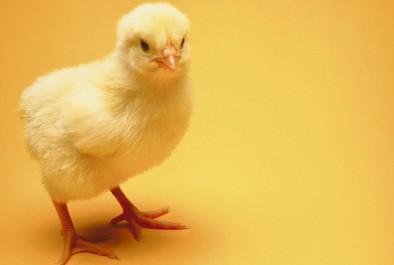 Nos meilleures idées pour un repas de Pâques facile
