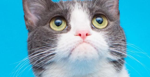 Chat qui lèche lécran gratuit