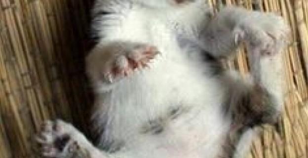 Pourquoi avoir un mec est mieux qu avoir un chat - Pourquoi un chat fait pipi sur le lit ...